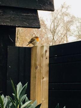 Veel te zien voor vogelliefhebbers